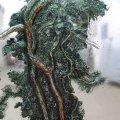 borovice sklo det koruna web ctverec